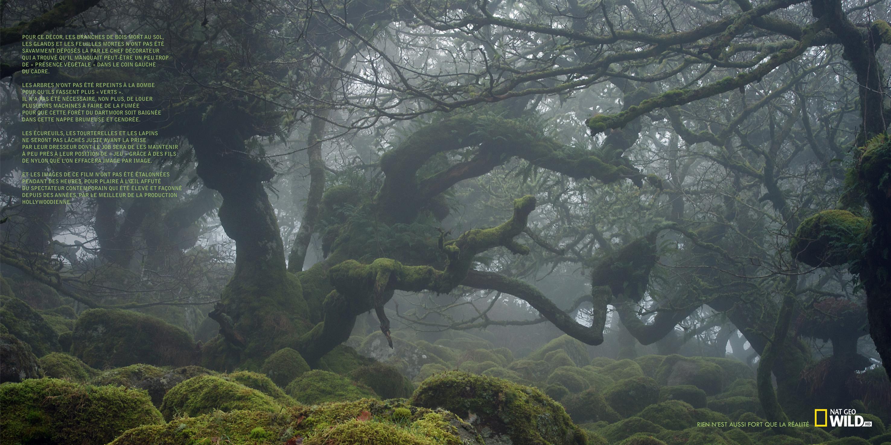 nat geo wild forêt