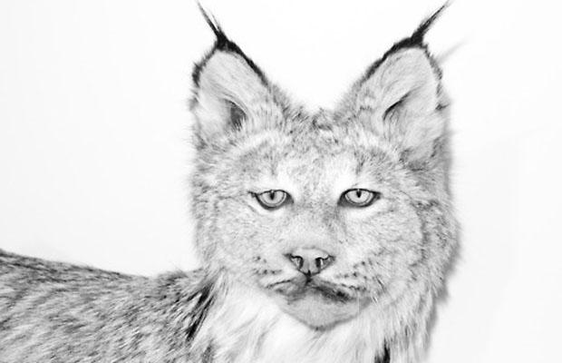 terry richardson animaux 6