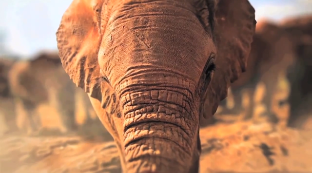 40 ans WWF France showcse interactif experience digitale 4
