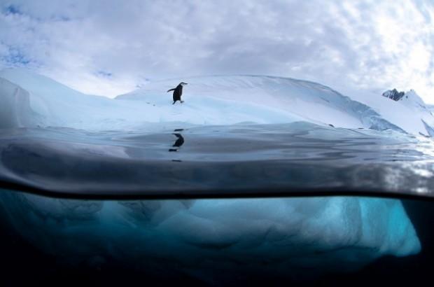 antartic wildlife 1