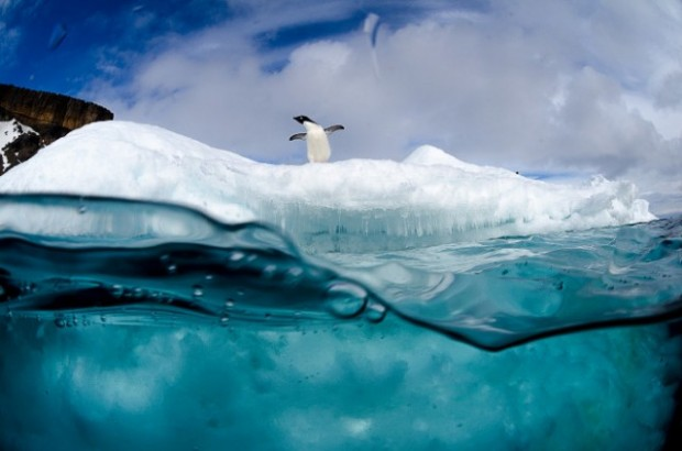 antartic wildlife 2