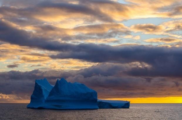antartic wildlife 3