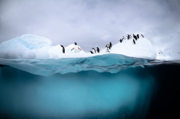 antartic wildlife 7