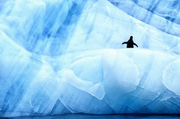 antartic wildlife 8