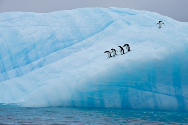 antartic wildlife 9