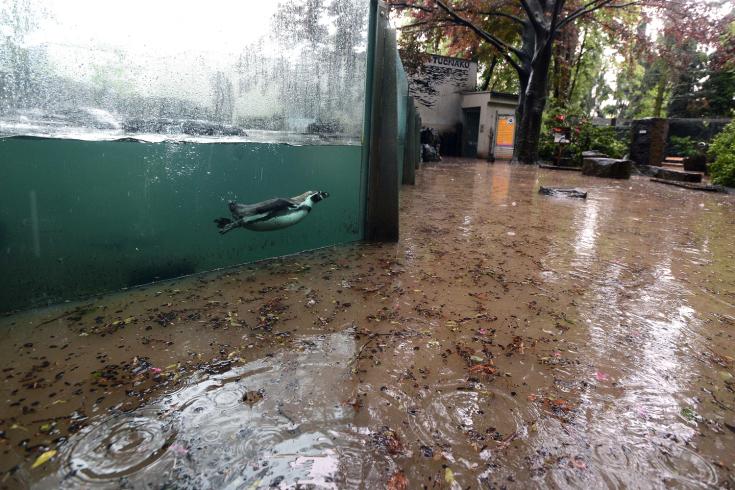 Czech, floods, Zoo Prague, Humboldt penguin