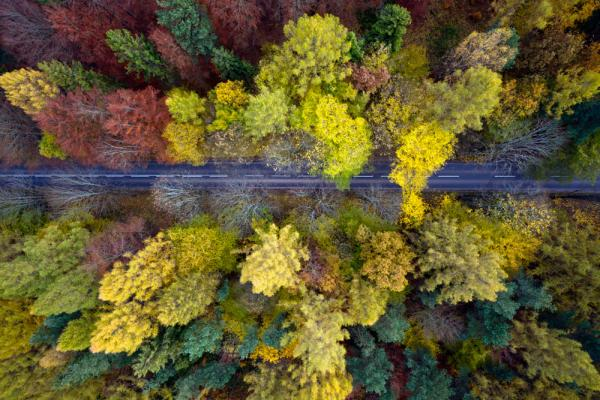 Cztery-pory-roku-jesien-4_reference