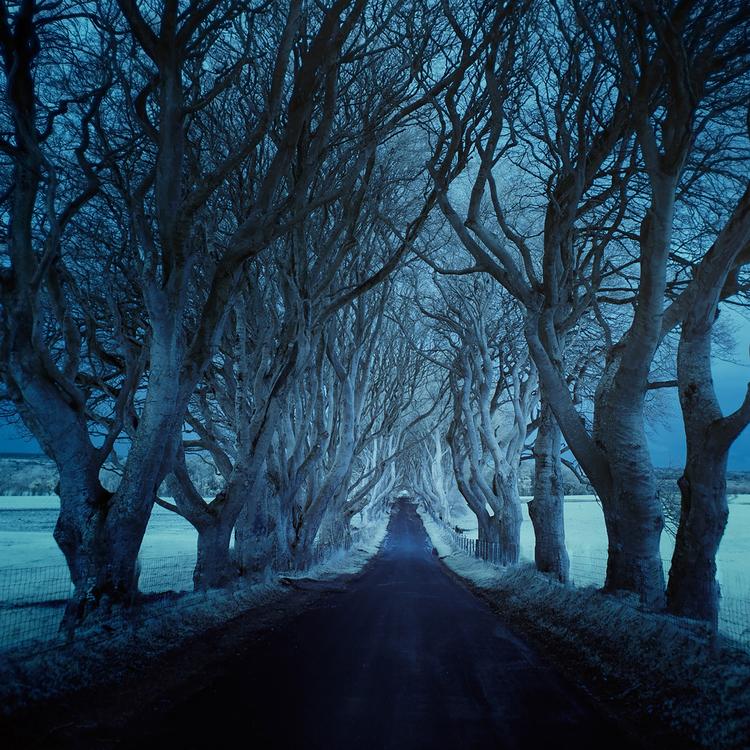 Roads_DarkHedgesIR_AndyLee©2015