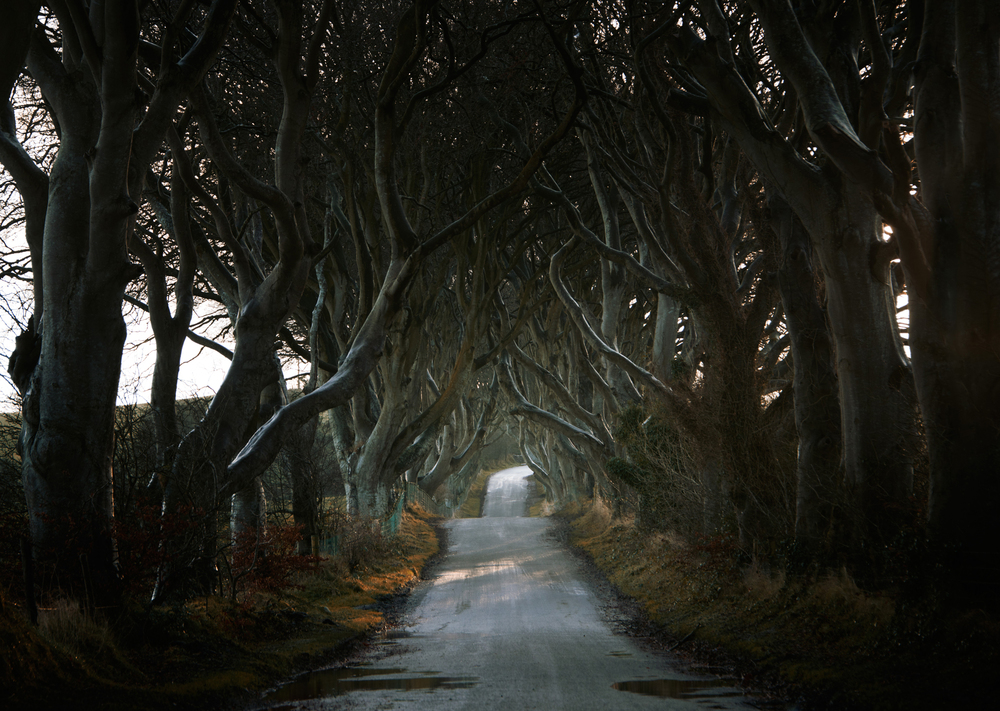 Roads_DarkHedges_AndyLee©2015