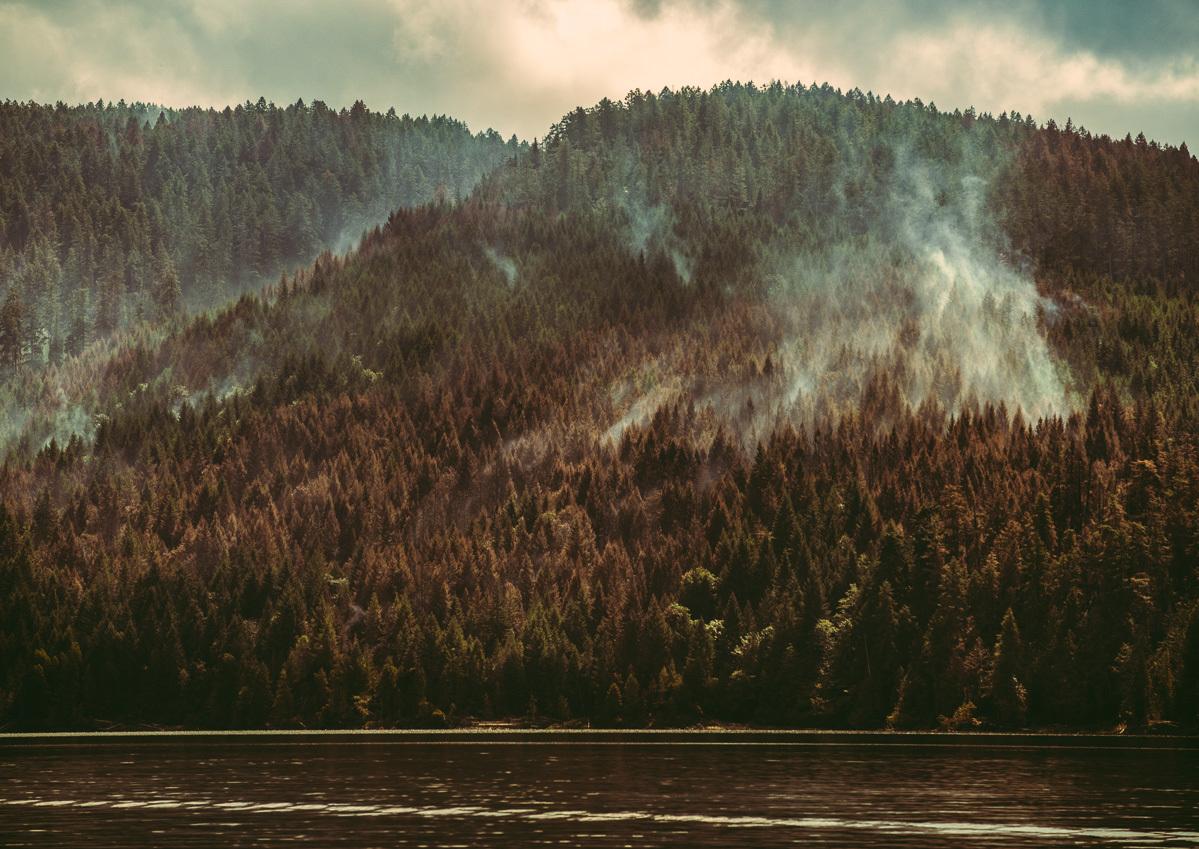 circa1983-forest-fire-13