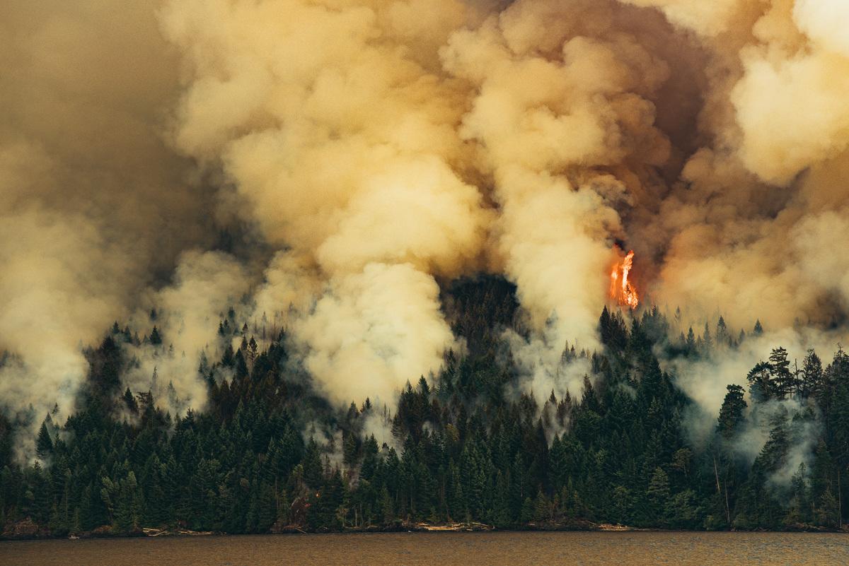 circa1983-forest-fire-4