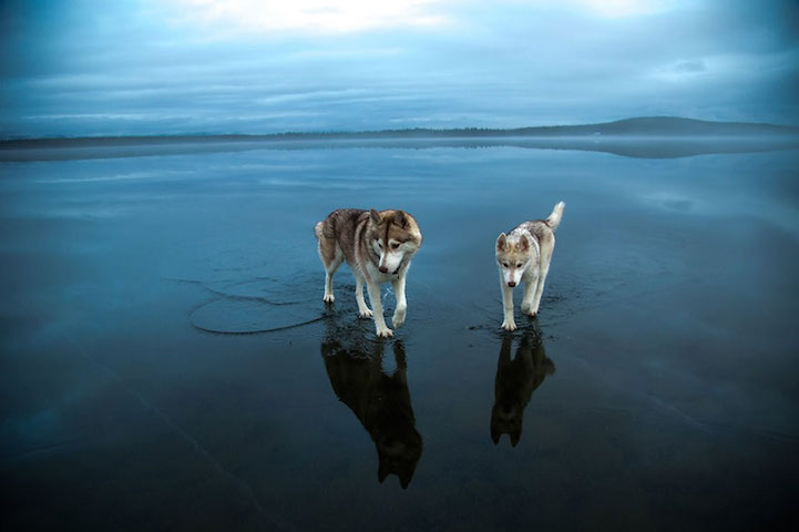 Huskies-frozen-Lake-6
