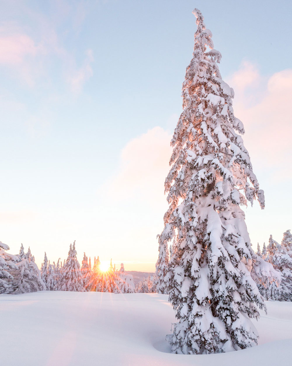 06-Christian-Schaffer-Crater-Lake-Snow-Tree-Sunset