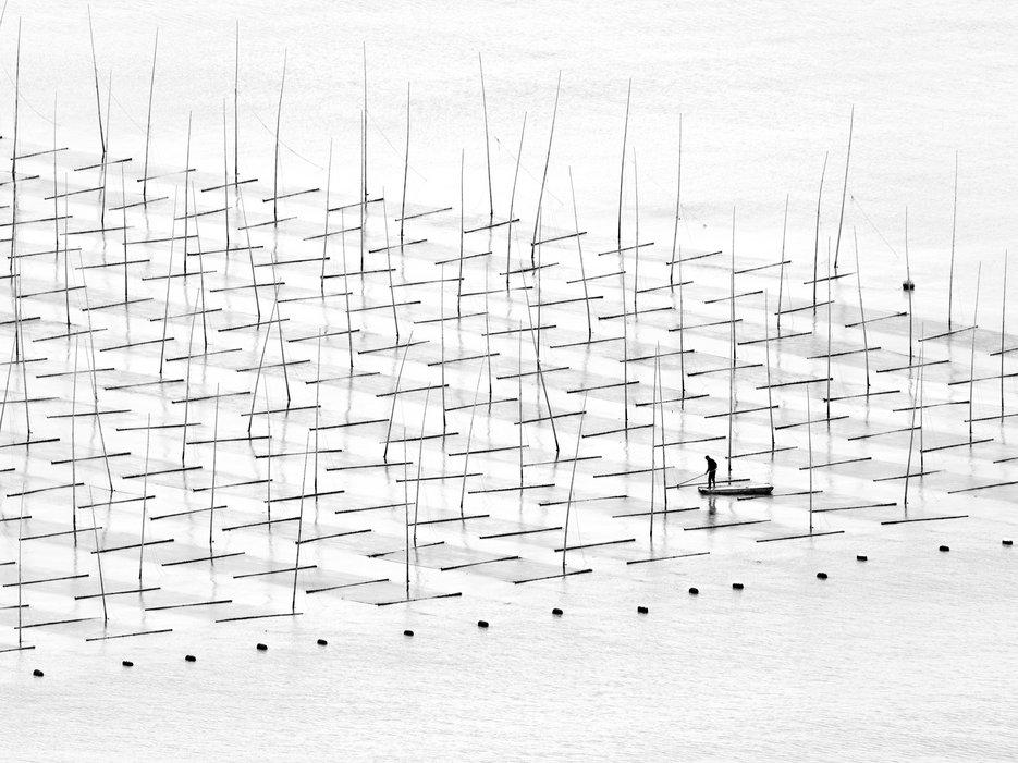 Farming the sea, sud de la Chine, par Tugo Cheng.