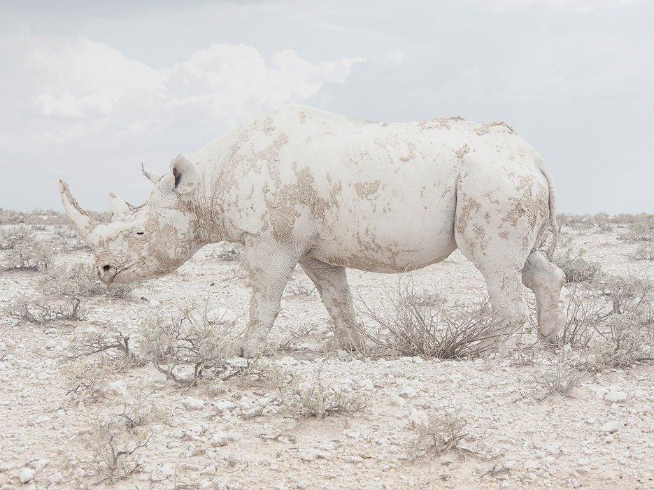 Land of Nothingness, Namibie par Maroesjka Lavigne.