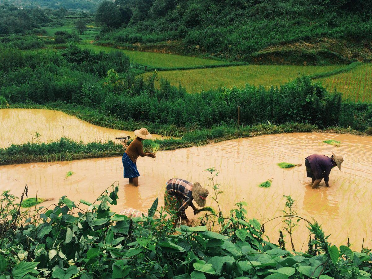 trek-myanmar-chloe-brunet9