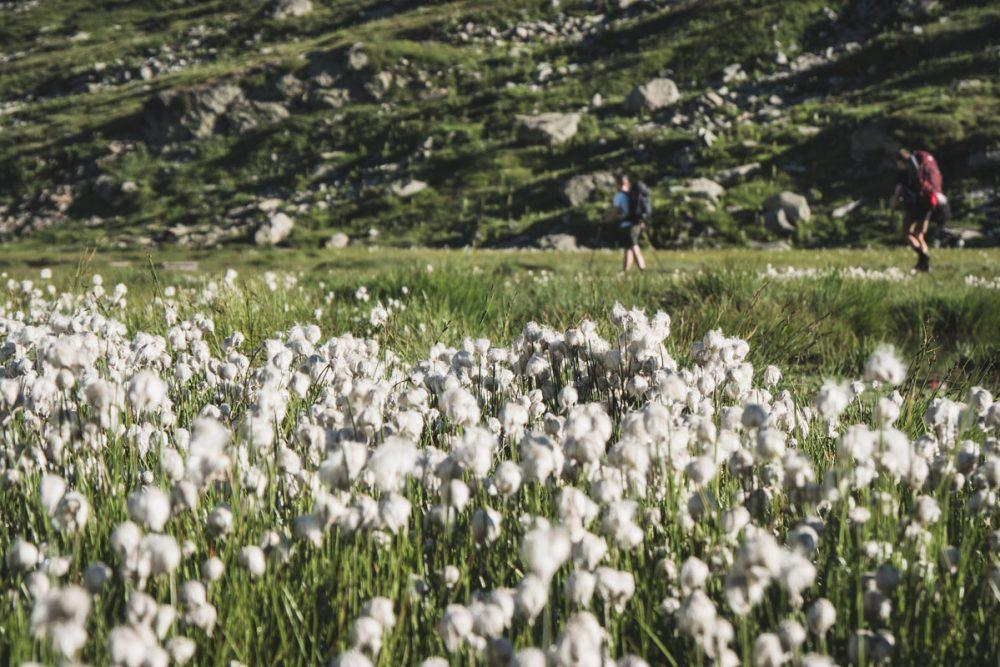 La randonnée du Tour des glaciers de la Vanoise traverse le parc naturel de la Vanoise