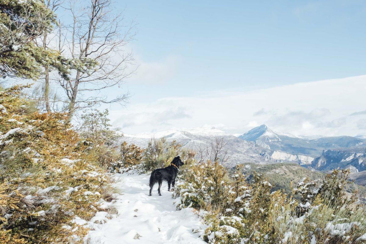 Nous avons pu profiter de paysages enneigés lors de notre randonnées dans les gorges du Verdon.