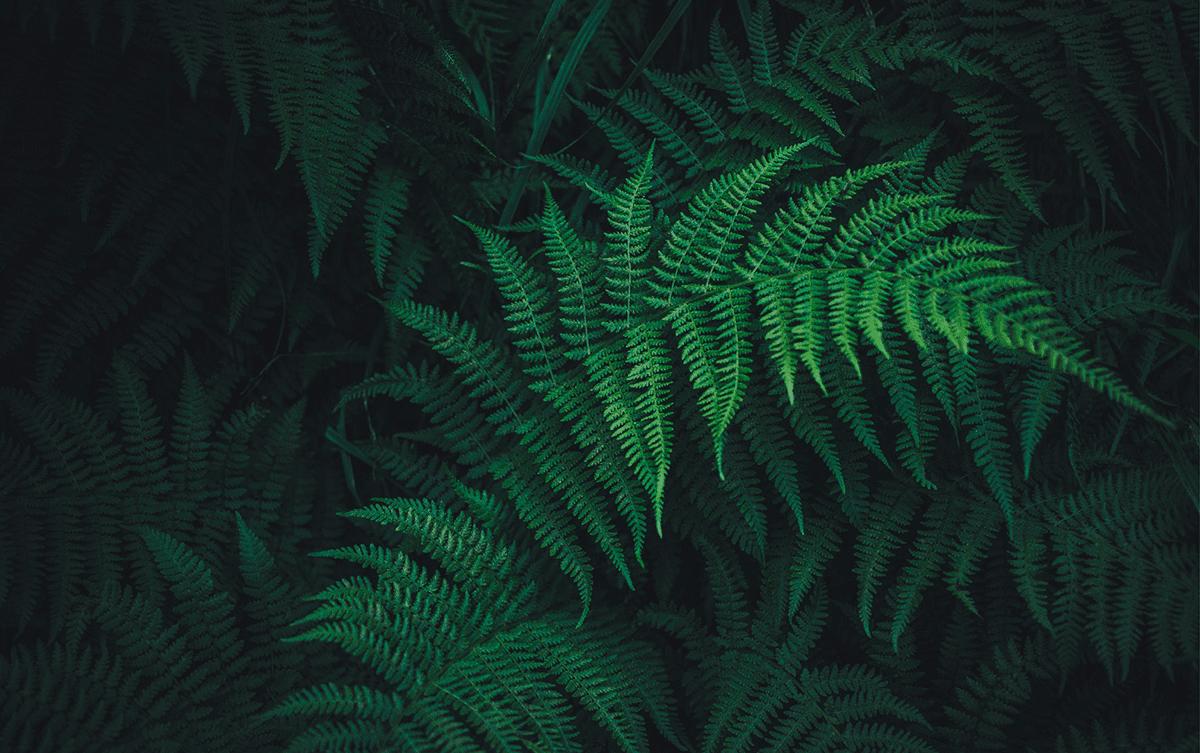 Vincent Piton passionné de plantes sur Te Araroa en Nouvelle-Zélande, Les Baladeurs