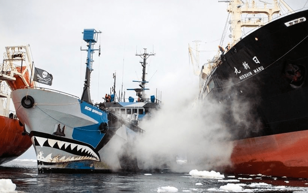 Lamya Essemlali Sea Shepherd chasse baleine japonnais Les Baladeurs