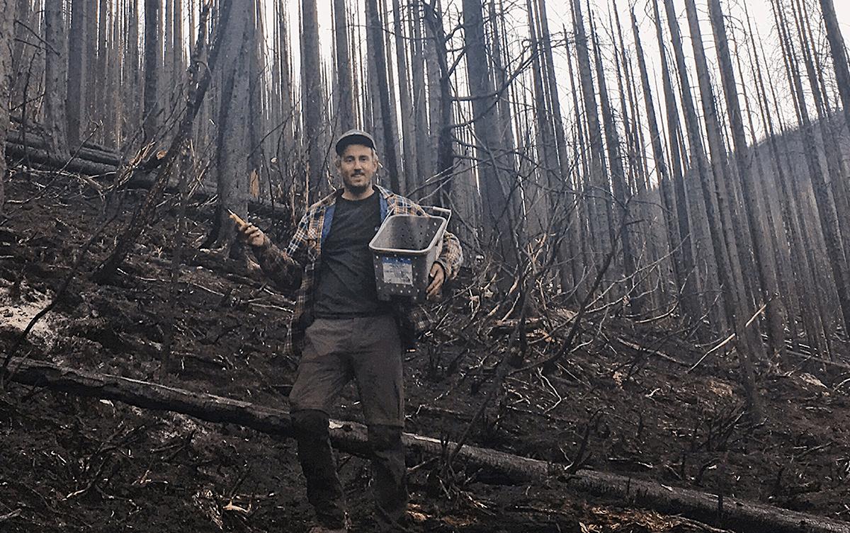 Le cueilleur de champignons Arnoul Matteo part dans les forêts canadiennes à la recherche des morilles de feu.