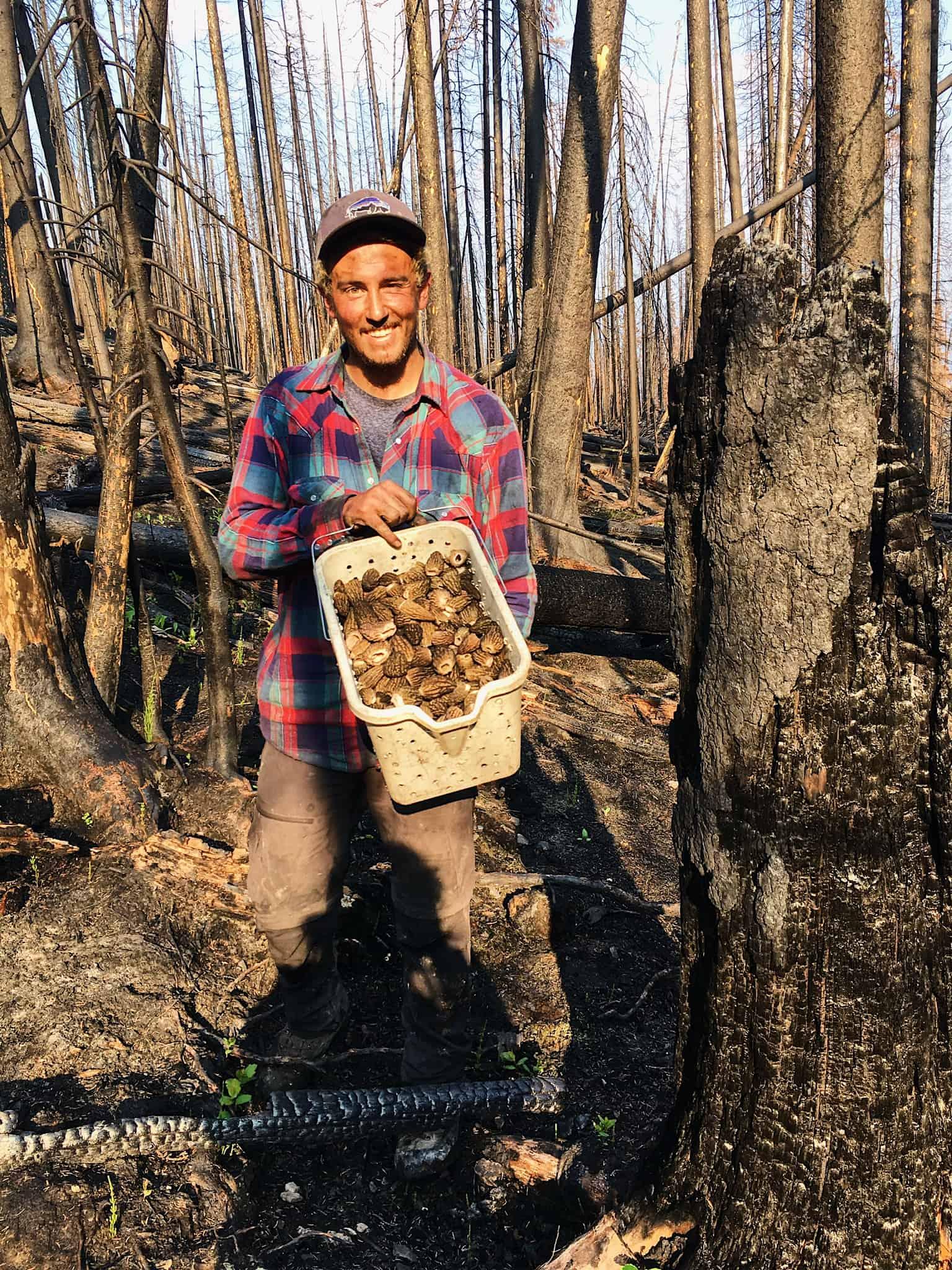 La belle récolte de champignons d'Arnoul Matteo