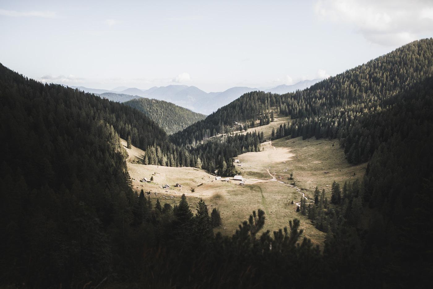 Dans les forêt de Slovénie