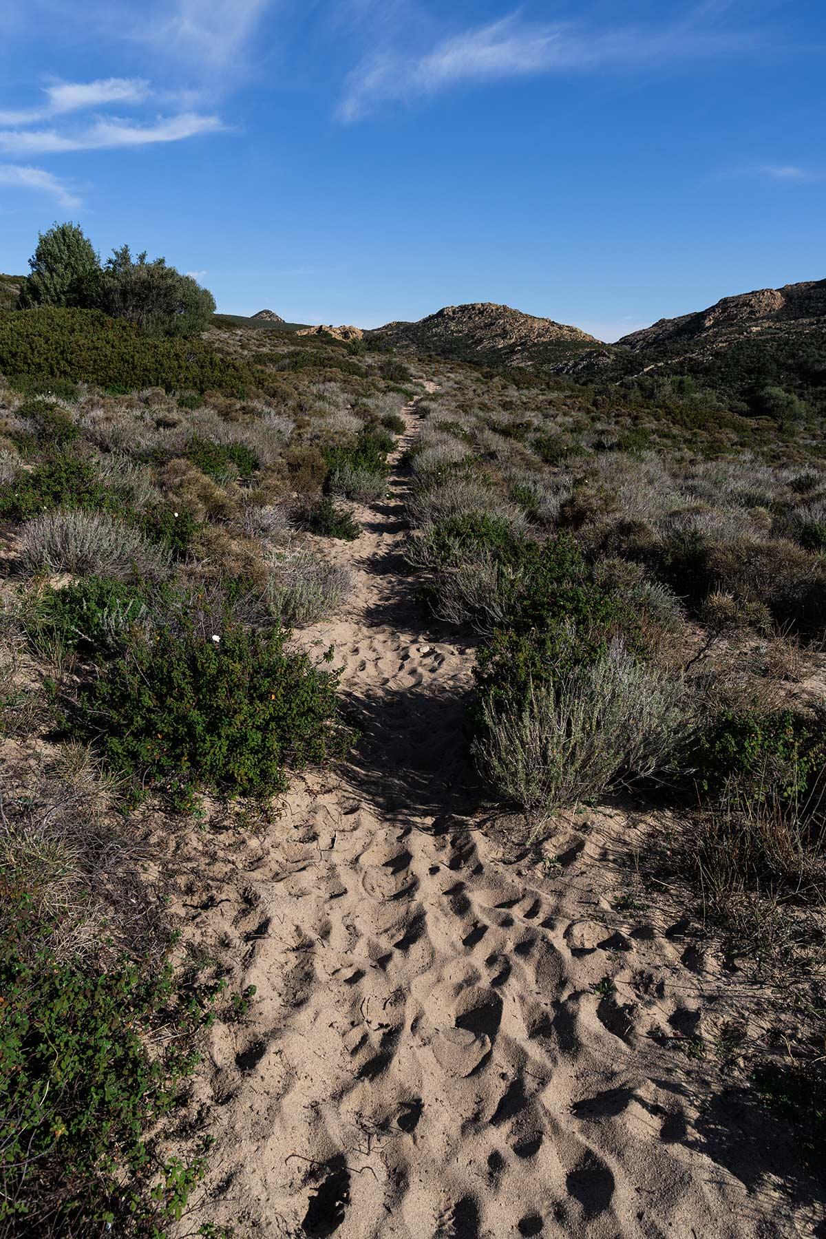 Randonnée dans le sable du désert des Agriates, en Corse