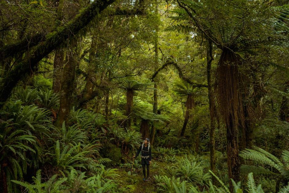 Dans la forêt de Longwood, sur le Te Araroa Trail en Nouvelle-Zélande