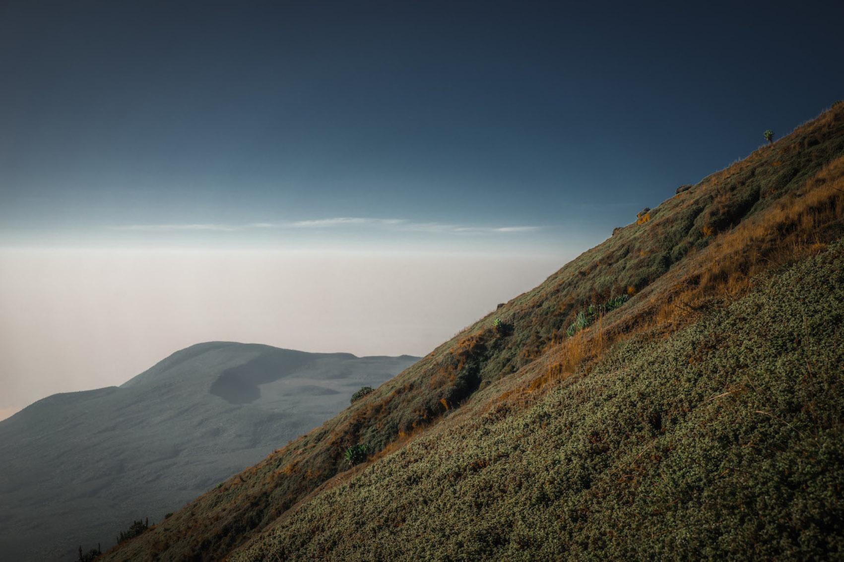 Sur les pentes du volcan Karisimbi au Rwanda.